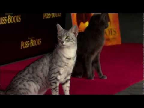 Antonio Banderas at Puss In Boots premiere