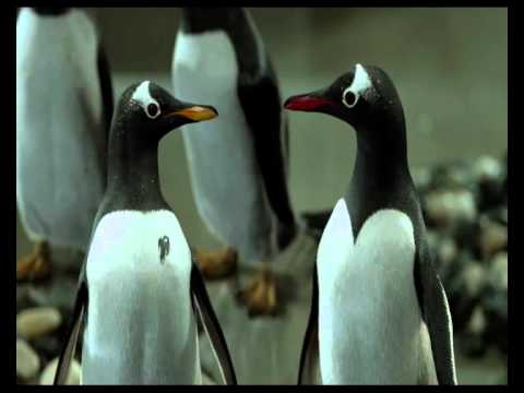 Mr. Popper's Penguins International Trailer HQ